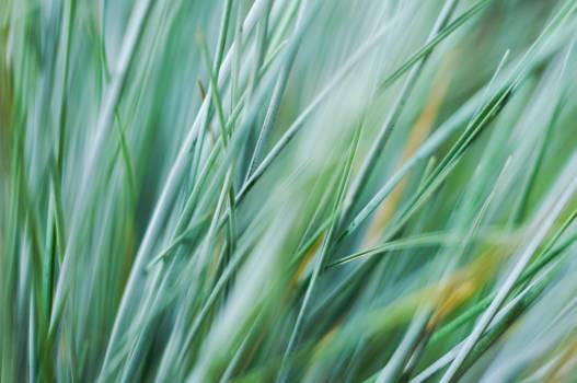 Green Grass Close-up Photo #42182