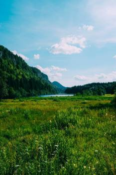 A Lush Green Meadow And Woods Under A Blue Sky #421927