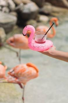 Flamingo Wading bird Aquatic bird #421967