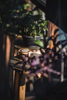 Glass Plant Tree Free Photo