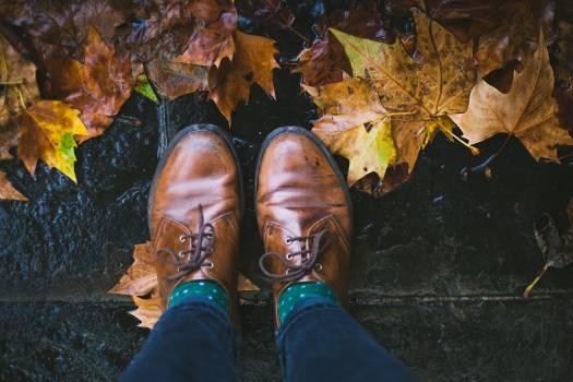 Loafer Shoe Footwear Free Photo