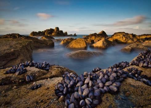 Beach Sea Ocean Free Photo