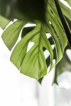Plant Leaf Tree Free Photo
