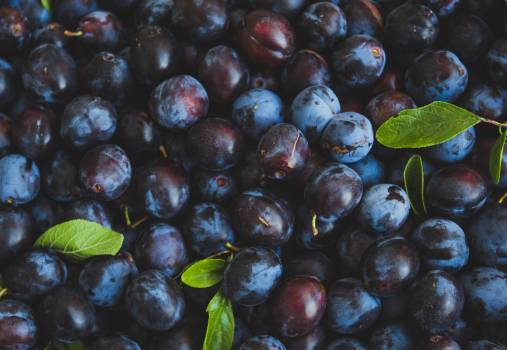Huckleberry Berry Fruit #422133