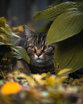 Cat Feline Pet #422135