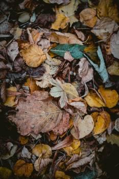 Fungus Organism Autumn Free Photo