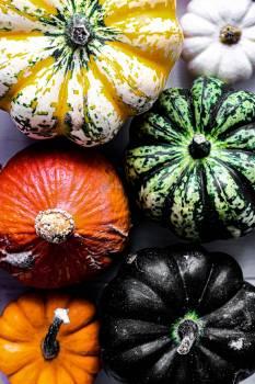 Pumpkin Squash Vegetable #422201