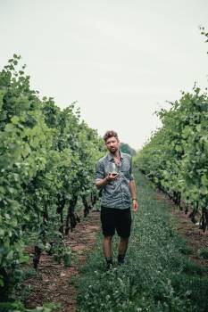 Man in Vineyard Free Photo #422281