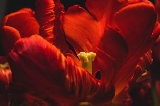 Petal Light Fractal Free Photo
