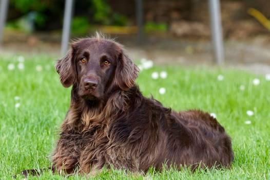 Animal dog pet eyes #42234