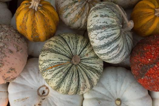 Pumpkin Squash Vegetable #422359