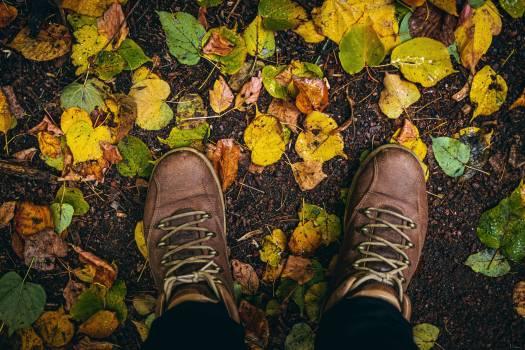 Covering Shoe Footwear Free Photo