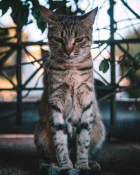 Tabby Domestic cat Domestic animal Free Photo
