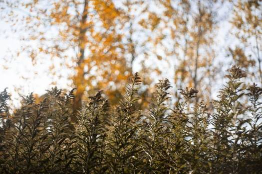 Prairie Plantlife Stands Tall In Autumn Forest #422484
