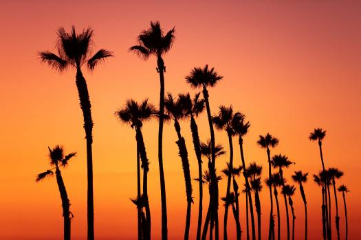 Palm Tree Tropical #422523