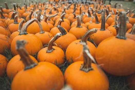 Pumpkin Vegetable Produce #422545