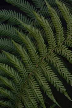 Fern Plant Forest Free Photo