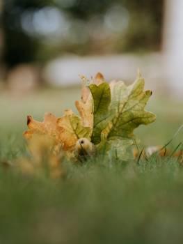 Tree Plant Sapling #422563