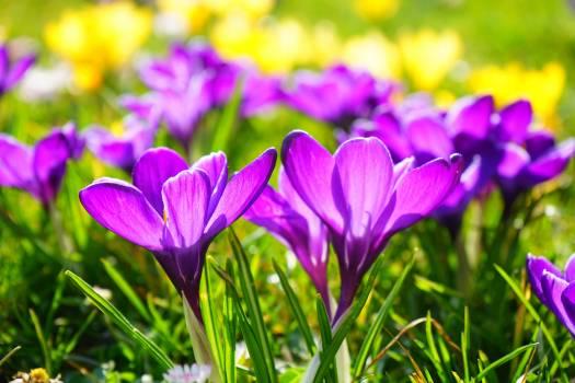 Purple Multi Petaled Flower #42259