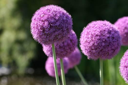 Herb Plant Flower #422638