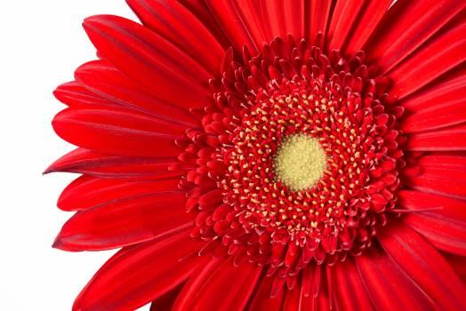 Macro Isolated Flower Free Photo Free Photo