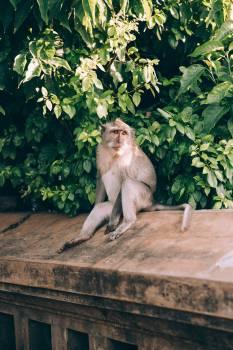 Monkey on Wall Free Photo #422684