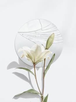 Plant Leaf Flower #422699
