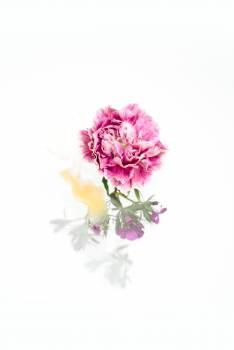 Pink Floral Flower #422739