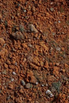 Red Clay #422785