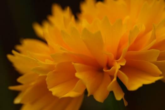 Petal Flower Plant #422800