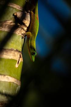 Lizard Green lizard Snake Free Photo