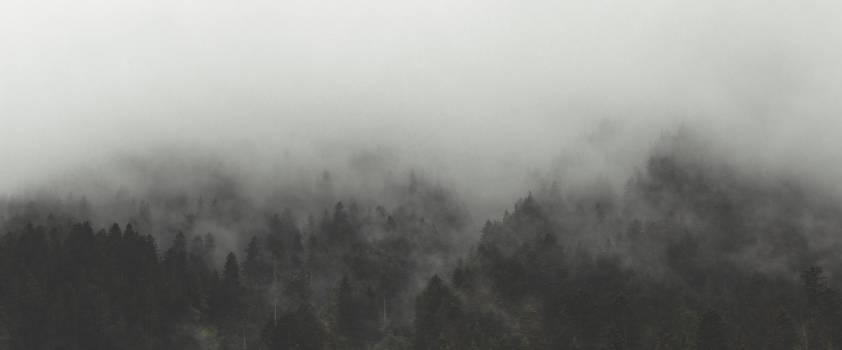 Fog Trees Nature Free Photo Free Photo