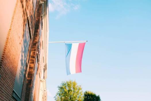 Dutch Flag Flies #422897