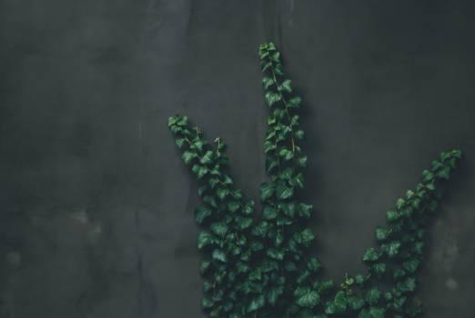 Tree Plant Vascular plant #422935