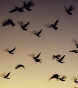 Silhouette Jet Flight Free Photo