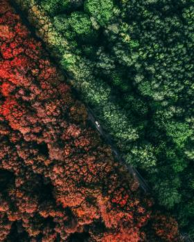 Tree Texture Grunge #422987