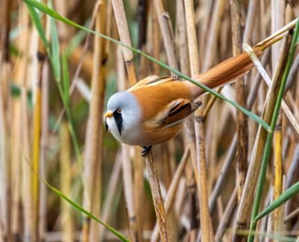 Habitat Bird Wildlife #423087
