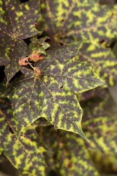 Mottled Leaf - Free Image For Commercial Use Free Photo