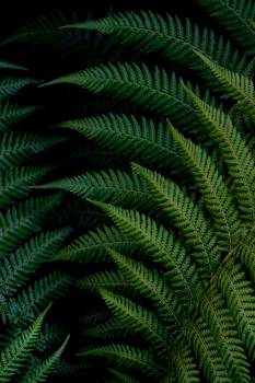 Fern Plant Forest #423123
