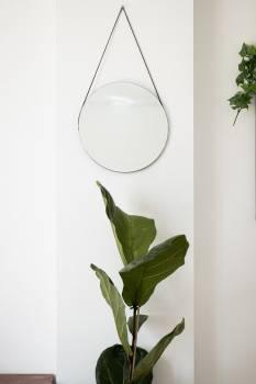 Vase Plant Flower #423124