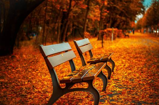 Autumn fall park bench  #423169