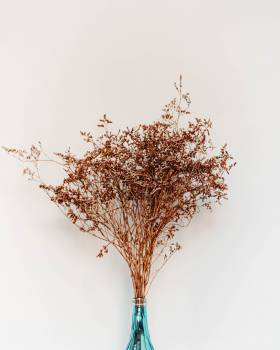Brown Petaled Flowers Decor #423171