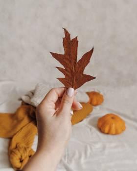 Autumn Maple Fall #423205