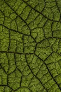 Net Texture Pattern Free Photo
