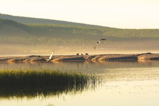 Khövsgöl Lake and Birds - Free Image For Commercial Use #423288