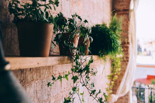 Potted Plants Shelf Free Photo Free Photo