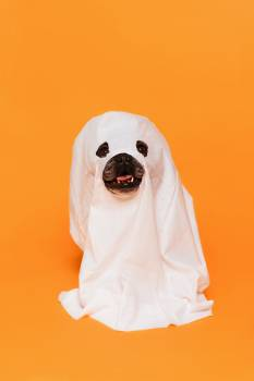 Cute Halloween Dog Ghost Costume #423345