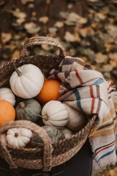 Pumpkin Squash Vegetable #423348