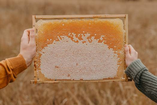Honeycomb Framework Texture Free Photo