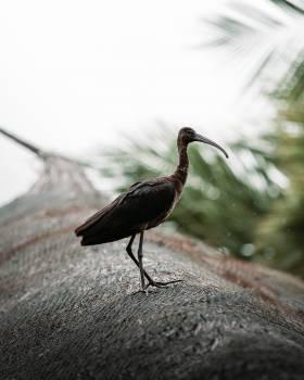 Wading bird Aquatic bird Bird Free Photo